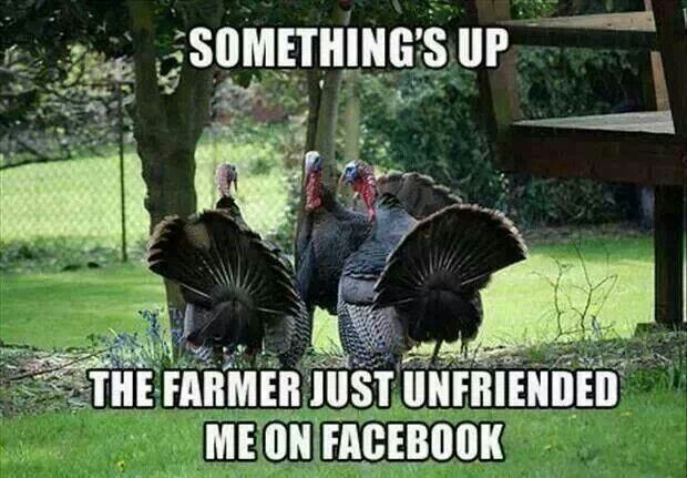 Thanksgiving Turkey Memes 2016