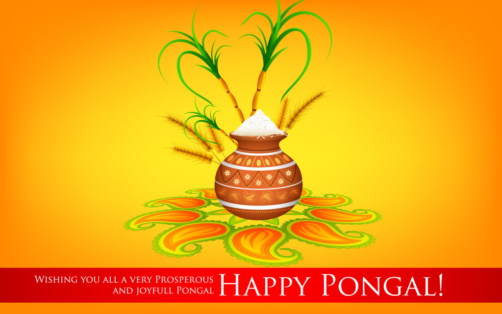 Happy Pongal HD Picture 1024x640