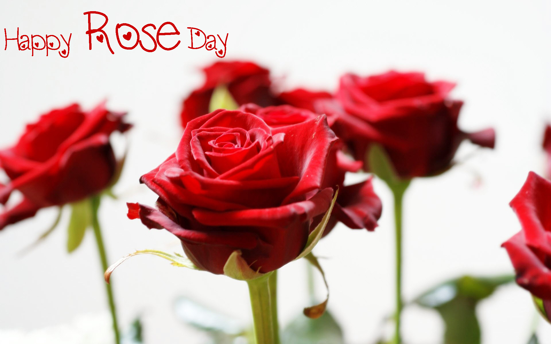 Happy Rose Day 2017 HD Photo For Husband
