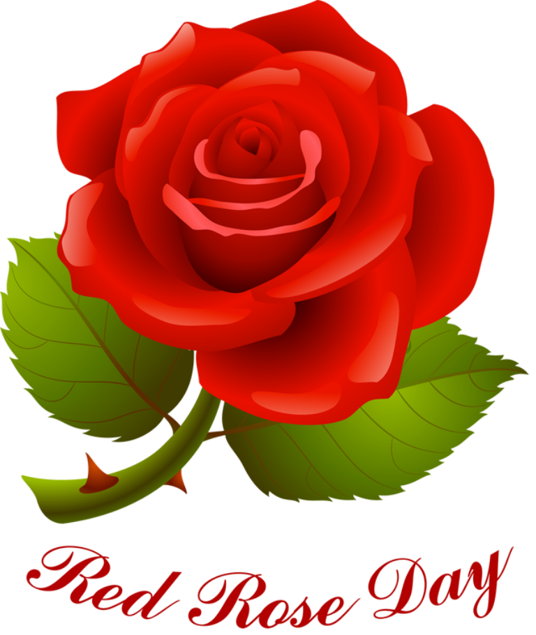 Happy Rose Day 2018 Whatsapp Dp & Profile For GF, BF, Wife, Husband, Crush & Fiance