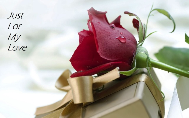 Rose Day HD Wallpaper For Girlfriend and Boyfriend
